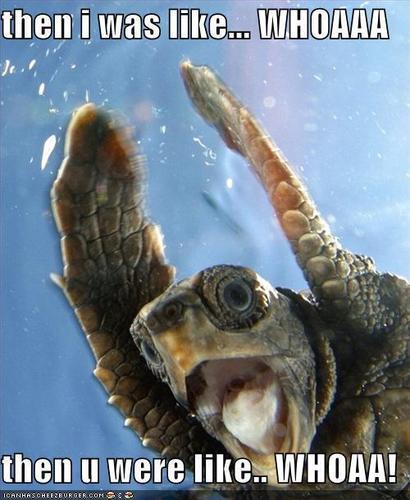 龟, 海龟 go woah!