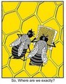 Bees - graphic-humor photo