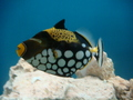 Creatures:photo 2 - aquariums photo