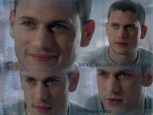 michael - wentworth-miller Wallpaper