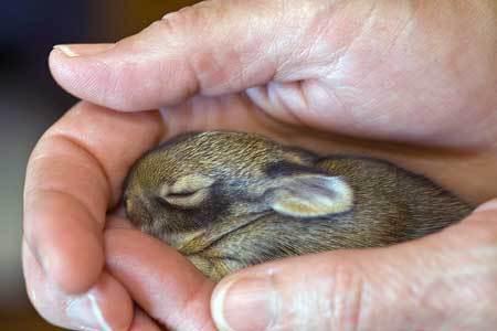 Bunny ^^