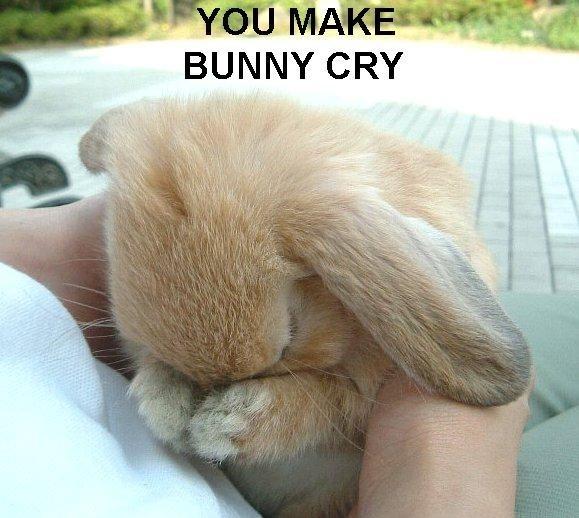 Baby bunny crying bunny