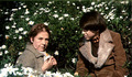Discussing Daisies - harold-and-maude photo