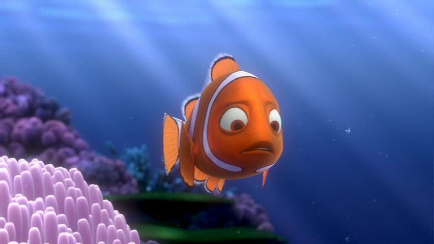 Nemo from finding nemo http www fanpop com clubs finding nemo images