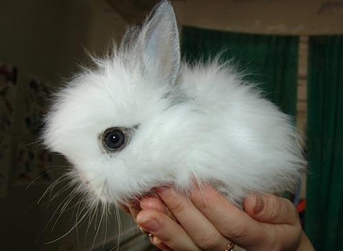 Fluffy Bunny ^^