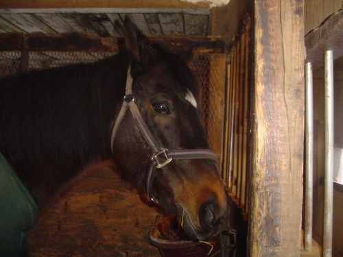 Harley in his stall