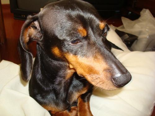 Nanda's Dog