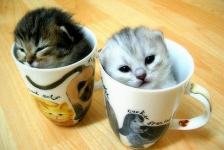 Cats wallpaper possibly with a coffee break and a kitten entitled kitty