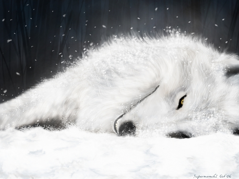 wallpaper wolf. white wolf - Wolves Wallpaper