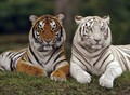 Mates - wild-animals photo