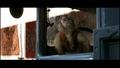 Raiders of the Lost Ark - indiana-jones screencap
