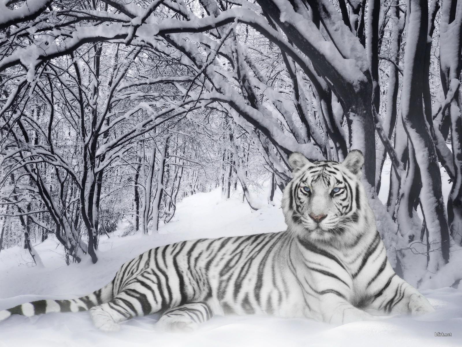 عکس حیوانات وحشی در حال شکار