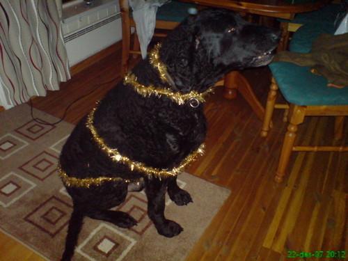 Zimmy, Ghost's weirdo dog <3