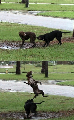 silly 子犬