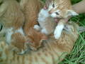 3 kitties with mom