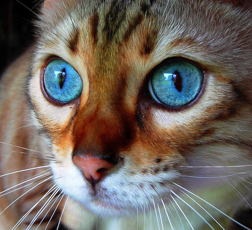 Beautiful Cat - cats Photo