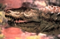 Postosuchus