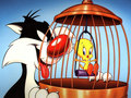 Tweety Bird Wallpaper - tweety-bird wallpaper