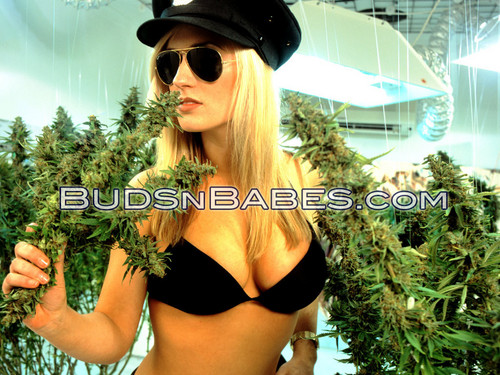 Marijuana images mahori HD wallpaper and background photos