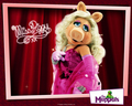 miss piggy - the-muppets wallpaper