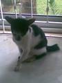 my fav cat!!