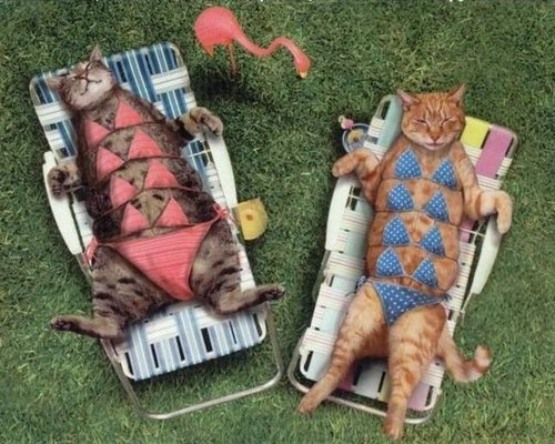 Lets get a Tan - cats Photo