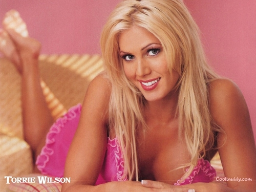 WWE Divas achtergrond possibly with attractiveness, a bikini, and a portrait entitled Torrie Wilson