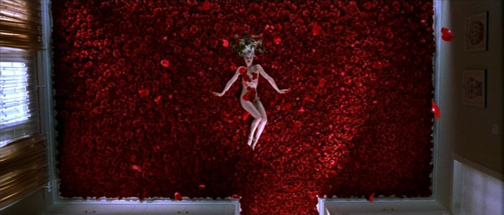 American Beauty Images American Beauty Wallpaper And
