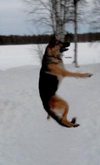 Cladra's Dog