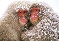 Frozen - wild-animals photo