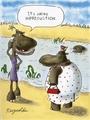 Hippo funny