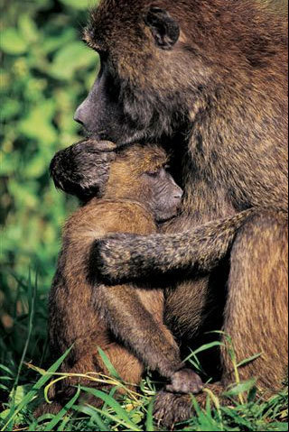 Wild Animals wallpaper entitled Mother And Baby