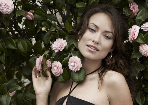 Olivia Wilde Hintergrund with a bouquet, a camellia, and a damask rose entitled Olivia