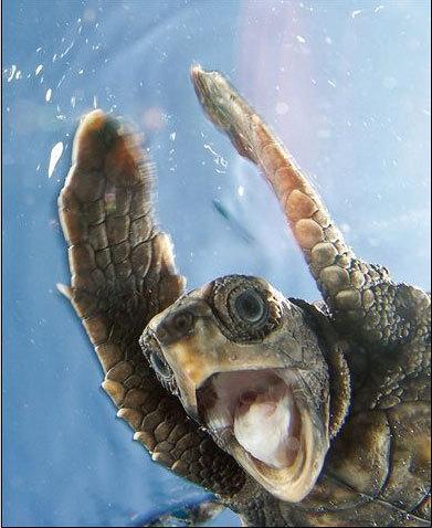 Wild Animals wallpaper called Turtle