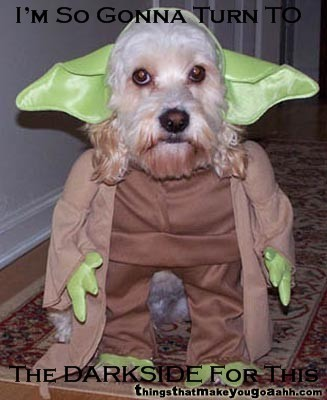 Animal Humor wallpaper called Yoda Dog