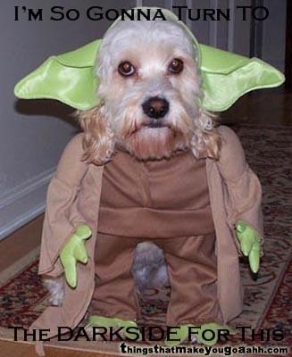 Animal Humor wallpaper titled Yoda Dog