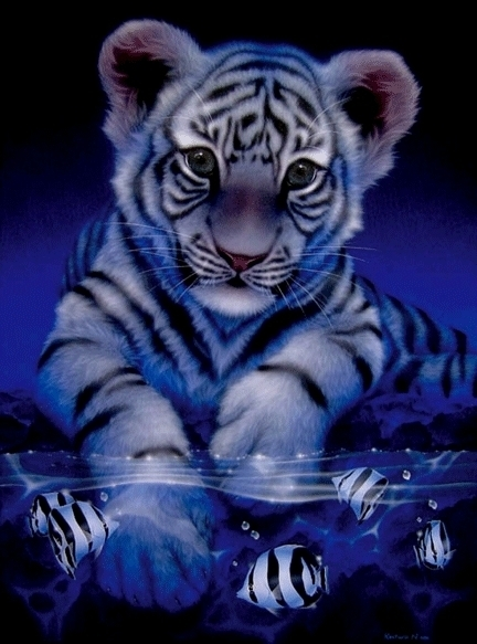 Cute tiger pictures - photo#20