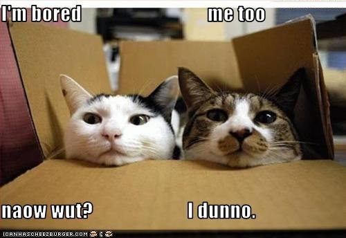 DAMN! gatos are Funny
