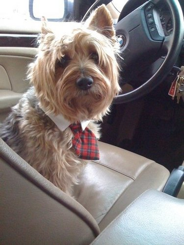 Doobie is Ready for Business