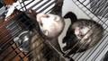 Ferrets/>