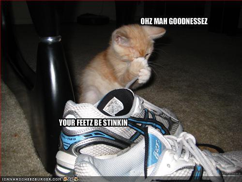 Funny Cats Pics. Funny Cats