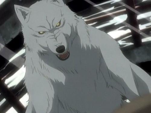 Wolf S Rain Kiba Lemon Story: Wolfs Rain Quotes  QuotesGram