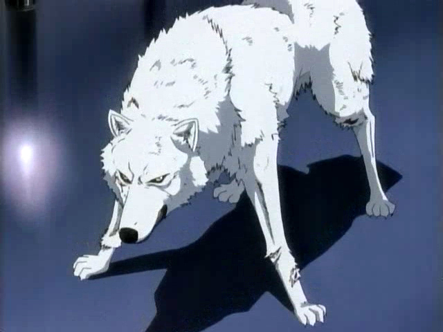 Wolf's Rain images Kiba wallpaper and background photos