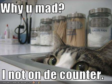 More Funny Cats - animal-humor Photo