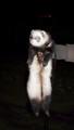 My ferret/s