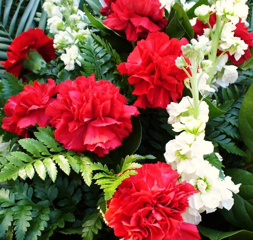 Red Hintergrund containing a begonia, a camellia, and an oleander titled red carnations