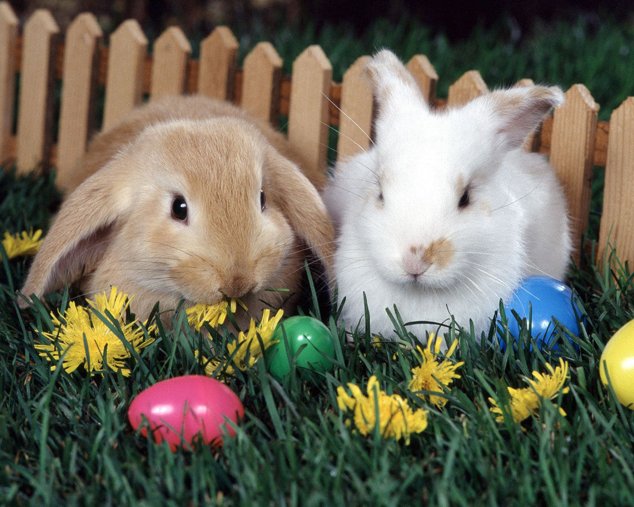easter bunny rabbits animals