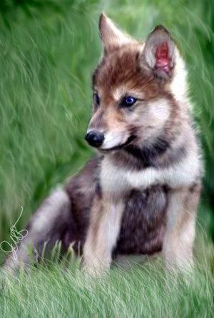 Alaba's নেকড়ে Pups
