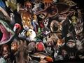 Animals Galore - wild-animals photo