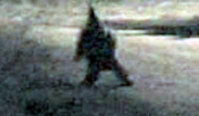 Argentina Gnome
